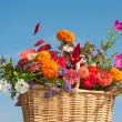 Stock Photo: Basket of brilliantly colored flowers and fall foliage