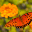 Dorsal view of a Gulf Fritillary butterfly — Stock Photo