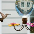 Stock Photo: Hummingbird at the feeder in the garden of a house
