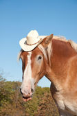Comical image of a handsome Belgian Draft horse wearing a cowboy hat — Stock Photo