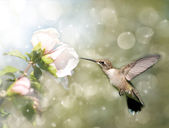 Dreamy image of a Ruby-throated Hummingbird — Stock Photo