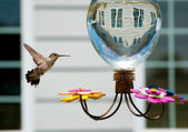 Hummingbird at the feeder in the garden of a house — Stock Photo
