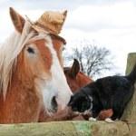 Hasır şapka yıpranmış bir aptal giyen Belçikalı taslak at — Stok fotoğraf