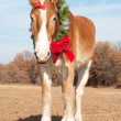 Handsome Belgian Draft horse wearing a Christmas wreath — 图库照片