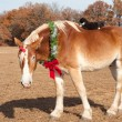 Cute image of a huge Belgian Draft horse wearing a Christmas wreath — Stockfoto