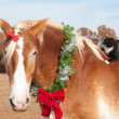 Closeup image of large BelgiDraft horse wearing Christmas wreath — Photo #5869725