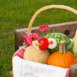 Closeup of a harvest basket with produce - Stock Photo