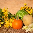 Fresh produce with sunflowers against rustic background — Stockfoto