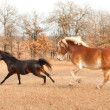 Stock Photo: Two horses running in fall pasture