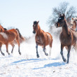 Group of horses charging in snow towards the viewer — Стоковое фото