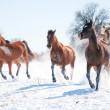 Group of horses charging in snow towards the viewer — Stock Photo