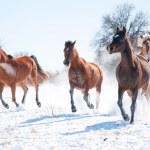 Skupina koní nabíjení sněhu směrem k divákovi — Stock fotografie