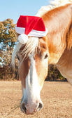Santa's big huge helper - a beautiful blond Belgian Draft horse — 图库照片