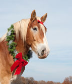 Beautiful blond Belgian Draft horse wearing a Christmas wreath — Stock Photo