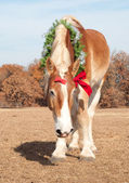 Handsome Belgian Draft horse in a Christmas wreath — Stok fotoğraf