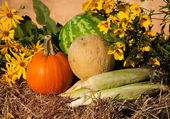 Pumpkin, corn, and melons on hay against rustic background — Stock Photo