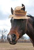 Cute little Arabian horse wearing an old, worn out straw hat — Stock Photo