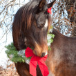Very cute dark bay Arabian horse wearing a Christmas wreath — Stock Photo