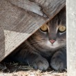 Hide a kitty - cat hiding under wooden steps — Zdjęcie stockowe