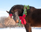 Beautiful dark bay horse wearing a Christmas wreath — Stock Photo