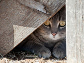 Hide a kitty - cat hiding under wooden steps — Stock Photo