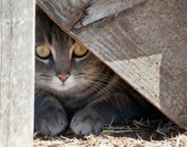 Cat hiding under wooden steps — Stock Photo