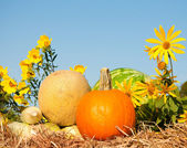 Färskvaror med blommor på bal med hö — Stockfoto