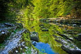 Forest reflection in a river's surface — Stockfoto