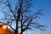 Ramo di albero — Foto Stock