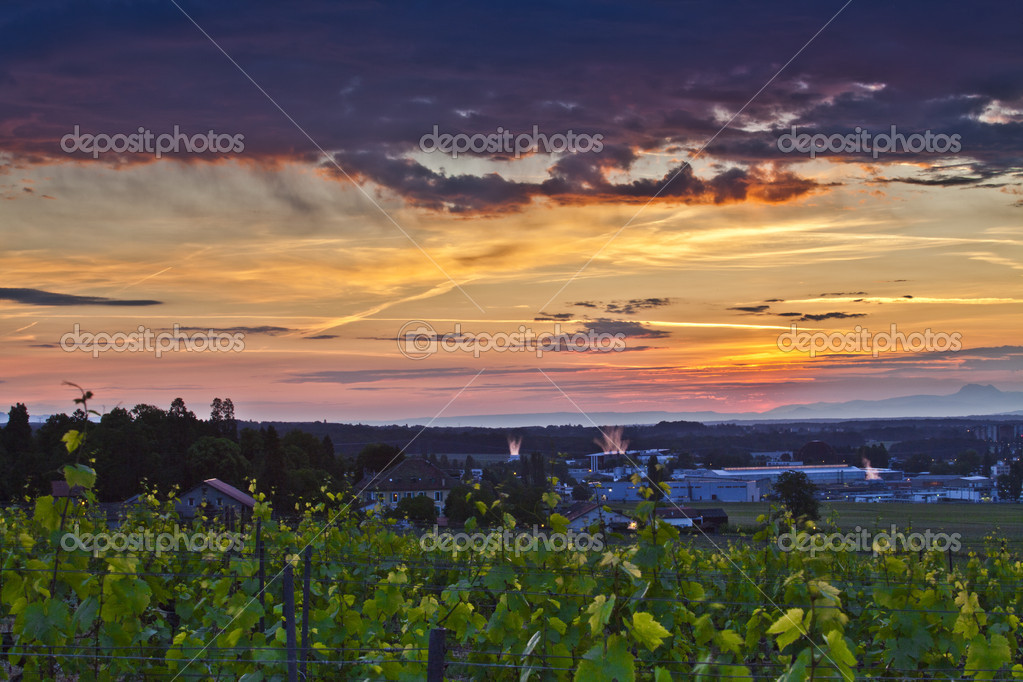 Sunrise at a Swiss vineyard — Stock Photo #5735667