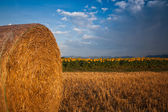 Wheat straw bale — Stock Photo