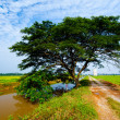 Stock Photo: Raintree