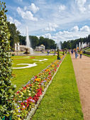 Beautiful lawn and flowers in Peterhof — Stock Photo