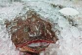 Fresh angler on ice — Stock Photo