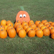 Stock Photo: Pumpkins laid out on grass along a Pumpkin Patch