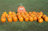 Pumpkins laid out on grass along a Pumpkin Patch — Stock Photo