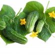 Green cucumber with leaves and flower isolated on white — Stock Photo