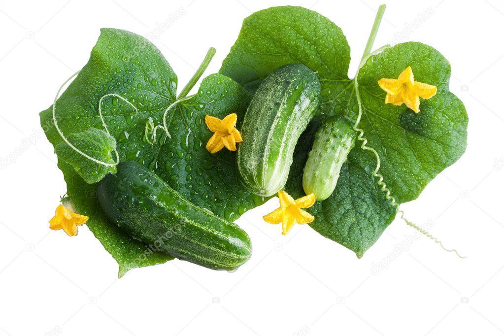 Green cucumber vegetable fruits with leafs and flowers isolated — Stock Photo #6305814