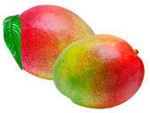 Mango — Stock Photo