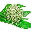 Stock Photo: Lily of valley