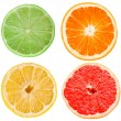 Citrus slices — Photo