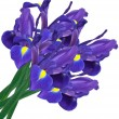 Purple iris — Stock Photo #6117745