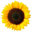 Sunflower — Stock Photo #6463964