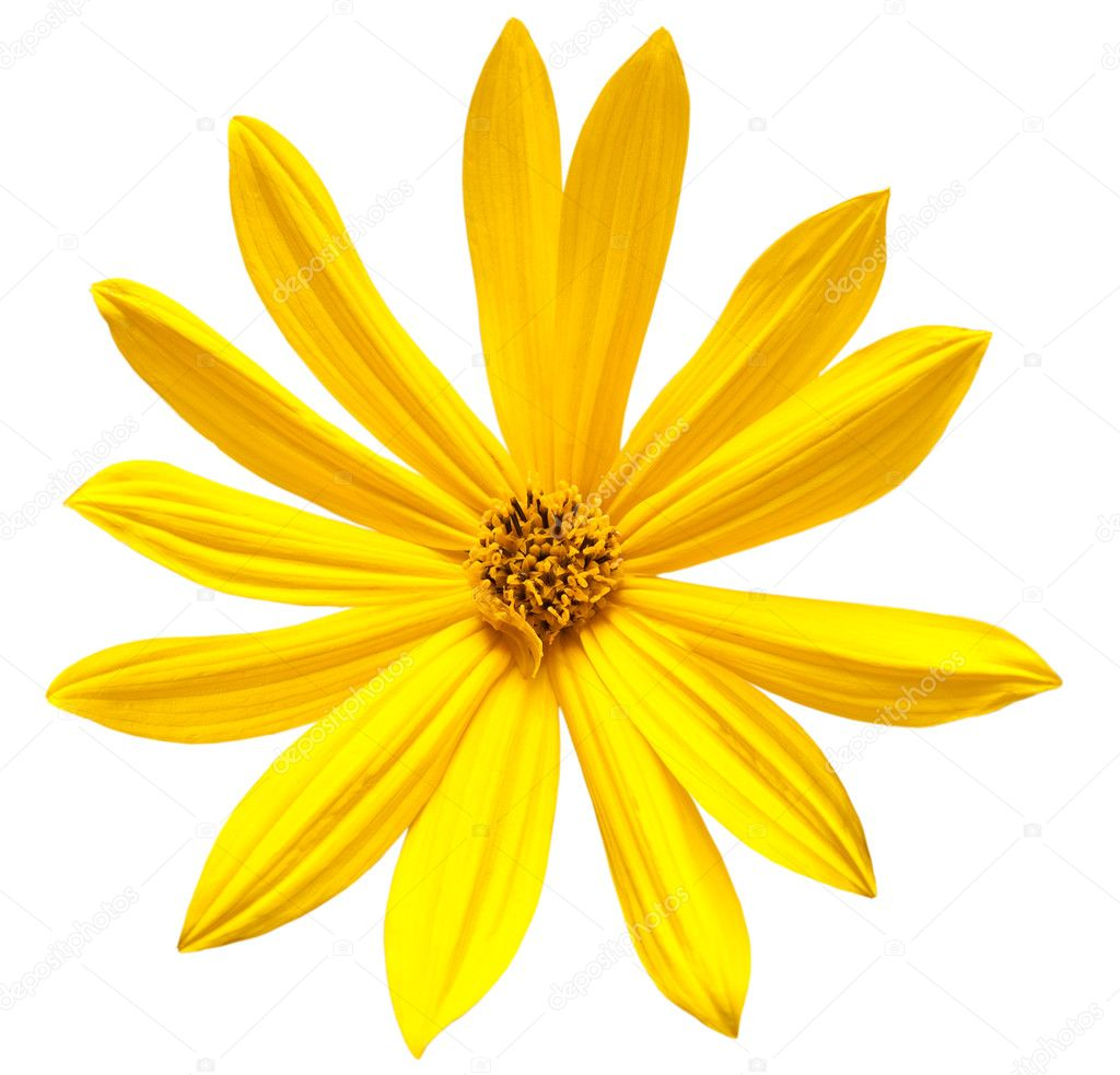 Yellow Flowers With White Background Beautiful Yellow Flowers Heart