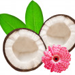 coconut — Stock Photo #6638849