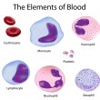 Royalty-Free Stock Vector Image: The cells of the blood