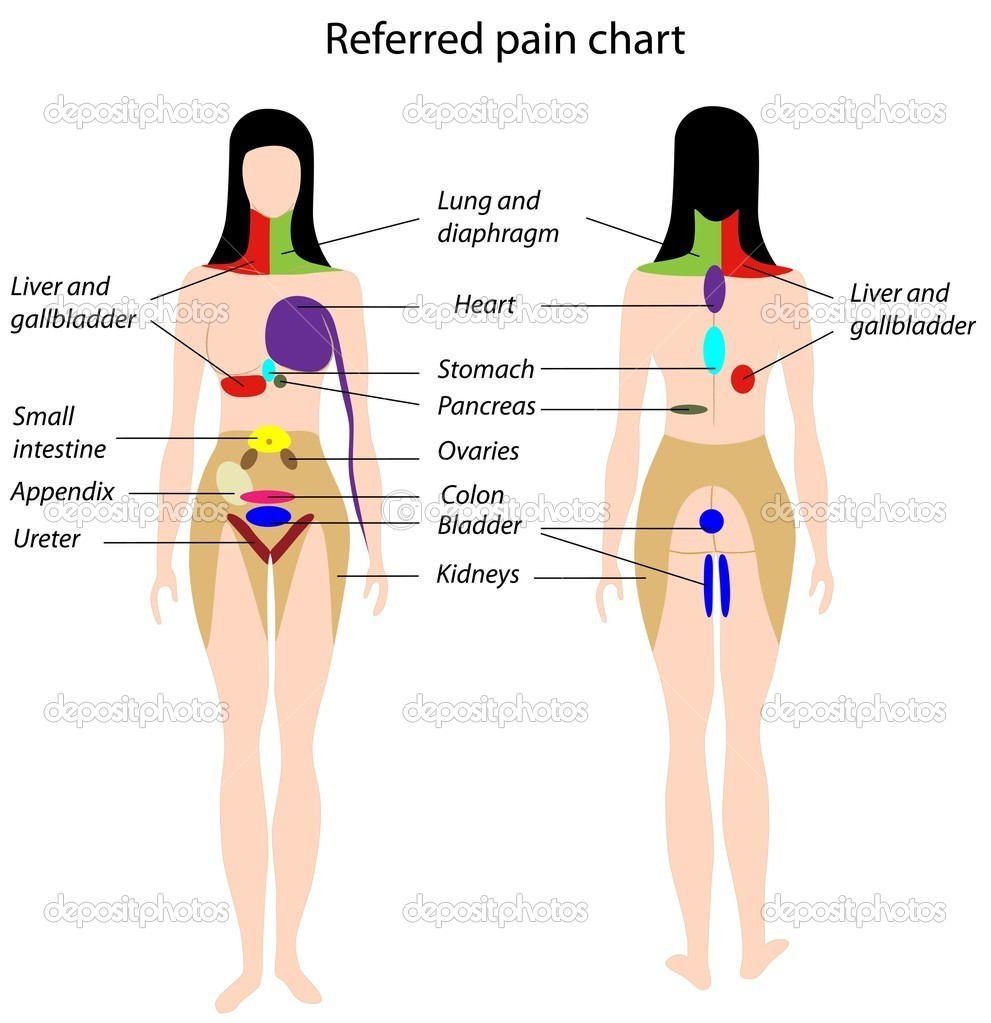 Diagram showing how pain from internal organs is felt in specific areas of the skin, eps8 — Stock Vector #5703858