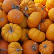 Fall Pumpkin Background — Photo