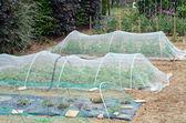 Greenhouses — ストック写真
