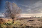 Solitary tree in the frosty morning — Stockfoto